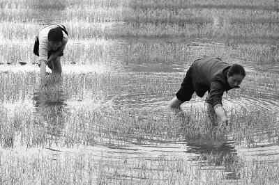 农村女性如何创业成功?