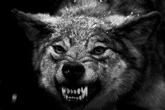 VP独白:从打工狗到创业狼