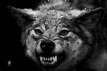 狼国成人色_vp独白:从打工狗到创业狼