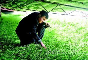 企业家生于89年盆栽韭菜每年销售超过1000万