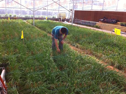 青岛80后辍学男创业建农场 没文凭照样年入千万