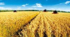 五点教你如何设计农业商业模式