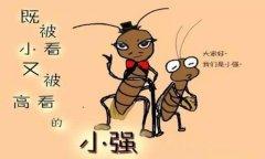 一只蟑螂,和一个创业者的爱恨纠葛