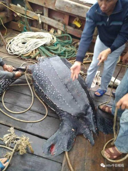 这么大的海龟长什么样的