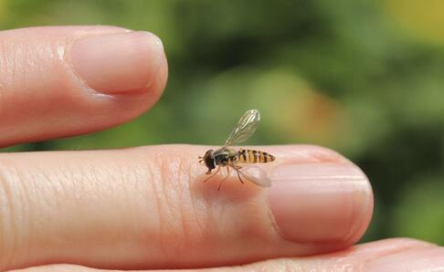 蜜蜂蜇伤卡通图片