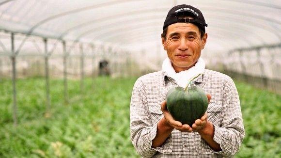 50万人排队赏猪,卖腊肠年入50亿,农业还能这样玩?