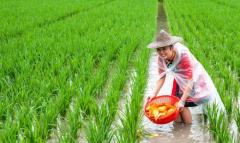 最具钱景的六大农业项目 利润高,国家还重点