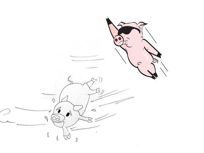 互联网这个江湖:风口太大,都忘了自己是猪