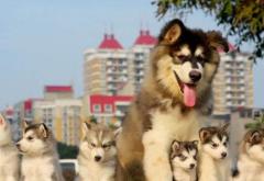 宠物加盟送体验金的官网如何才能快速赚钱