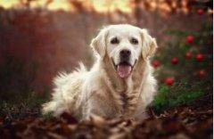 狗子幸福的成长环境 由优灿宠物食品倾力打造