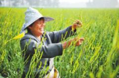 农民创业致富最新项目有哪些?