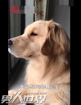 狗流泪是什么征兆