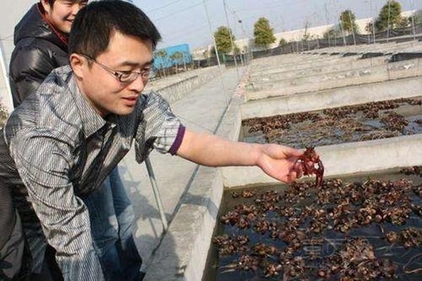 养殖龙虾一亩利润多少?怎样养殖龙虾更赚钱?