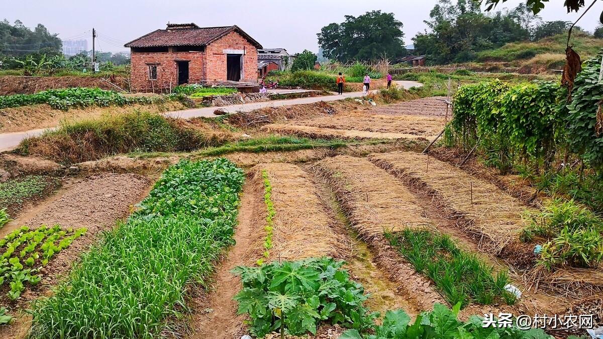 2021年在农村创业,试试这25个致富项目,搞好了不比打工差