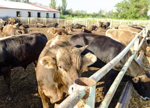 农村投资办厂好项目有哪些?哪些有前景?