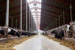 注册一个养殖公司需要多少钱?如何开?