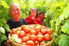 农业如何致富?特色农业致富项目