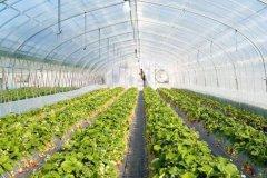 智慧农业前景如何?现在加入是否可行?